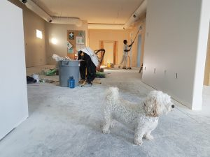 home-remodel-with-dog